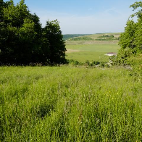 paysage pelouse Cote de l'étang Spoy