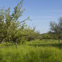 Verger pelouse Cote de l'étang Spoy